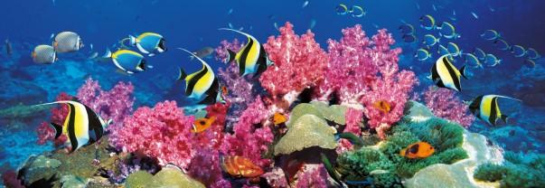 puzzle-barriere-corail-jpufrcle-39063