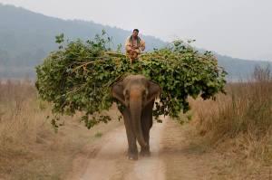 Elephant_Inde_22-01-2009 _164